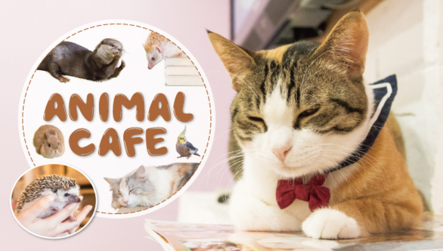 animalcafe222