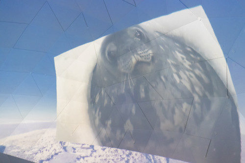 ドーム型シアターの中で、南極に生息する動物たちの生態を学習