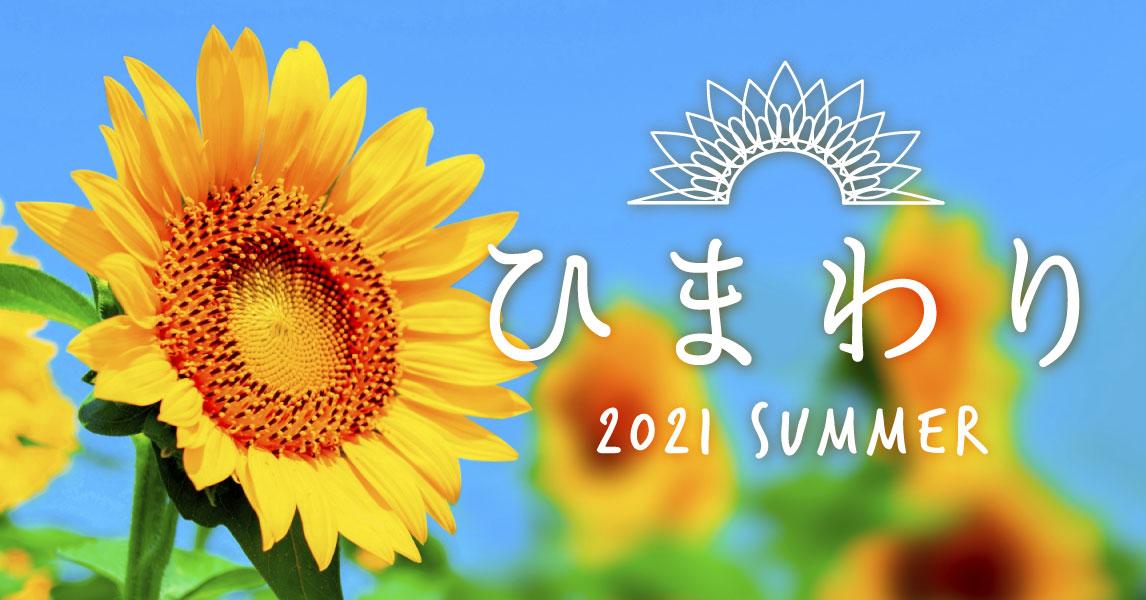 鮮やかな黄色に染まる夏の絶景 「ひまわり畑」
